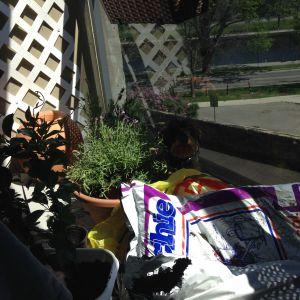 nora balcony