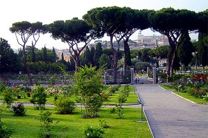 Roseto-Comunale-Roma-cypress-trees