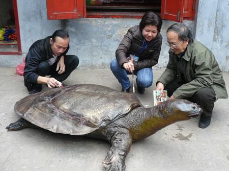 Hoan Kiem Turtle.jpg