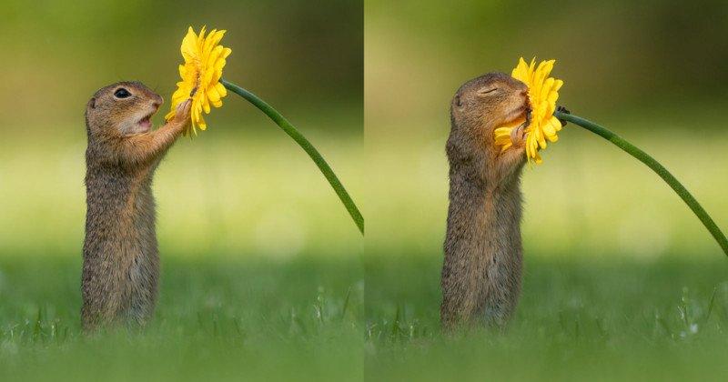 flowerfeattt-800x420-1.jpg