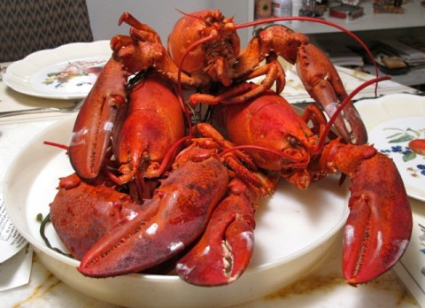 Platter-of-Lobsters-480x348.jpg