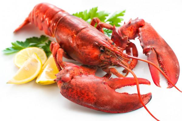 depositphotos_8929293-stock-photo-lobster