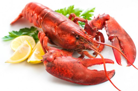 depositphotos_8929293-stock-photo-lobster